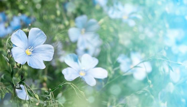 小さな青いかわいい花。