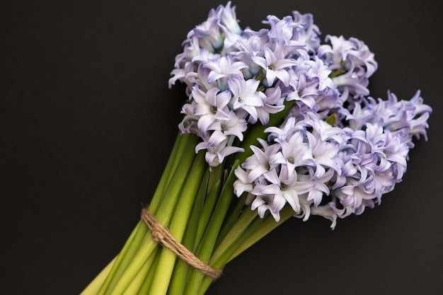 Little bouquet of blue spring flowers hyacinths