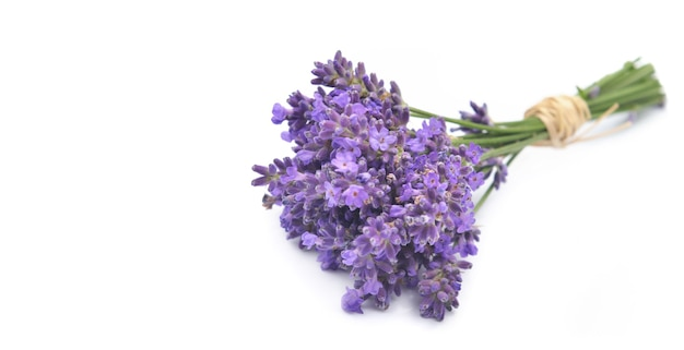 Little bouquet of lavender isolated on white background