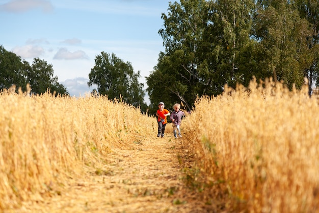 햇빛 속에서 밀밭에 있는 어린 소년과 소녀는 자연을 즐기며 놀고 있습니다. 필드와 일몰 하늘 배경 위에 키드는 아이. 어린이 환경 개념