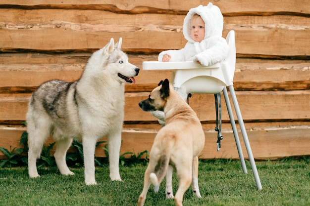 Little  boy in  bear costume sitting in high chair outdoor with playful dogs looking at him