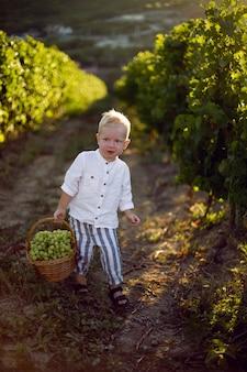 Маленький мальчик несет корзину с виноградом в винограднике