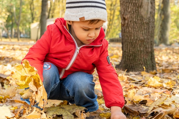 어린 소년은 공원에서 낙엽을 수집합니다