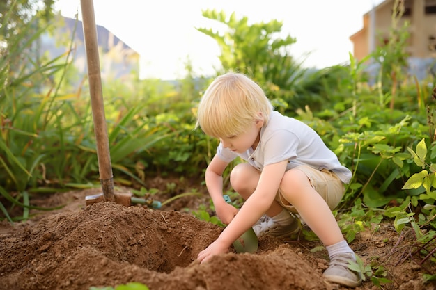 Little boy dig shoveling in backyard at summer sunny day