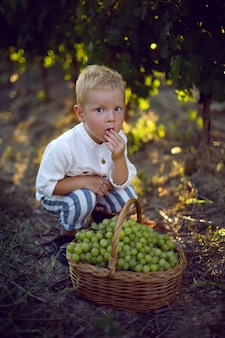 Маленький мальчик ест виноград из корзины