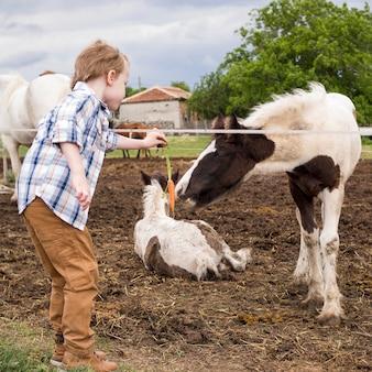少年が馬に餌をやる