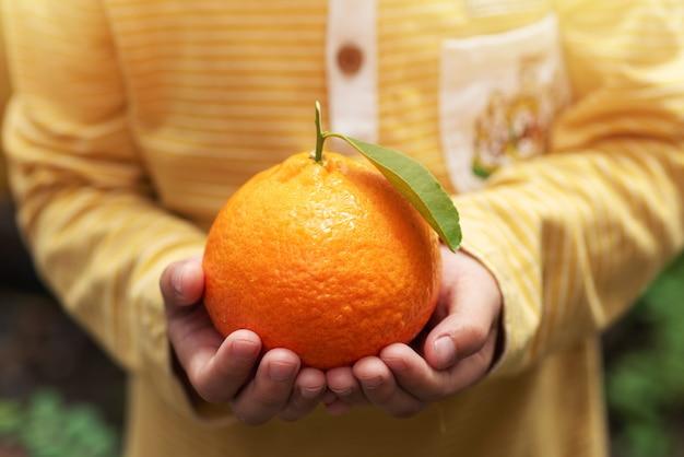 Little boy holding a big fresh mandarin oranges fruits in organic farm agriculture