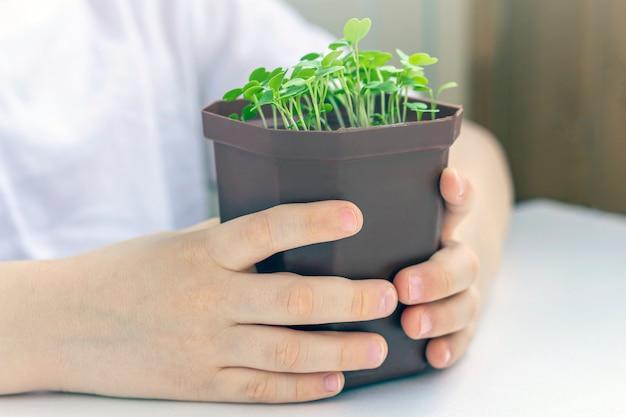 Мальчик держа бак с молодым заводом. забота о природе. концепция праздника земли и всемирного дня окружающей среды. выращивание овощей в домашних условиях.
