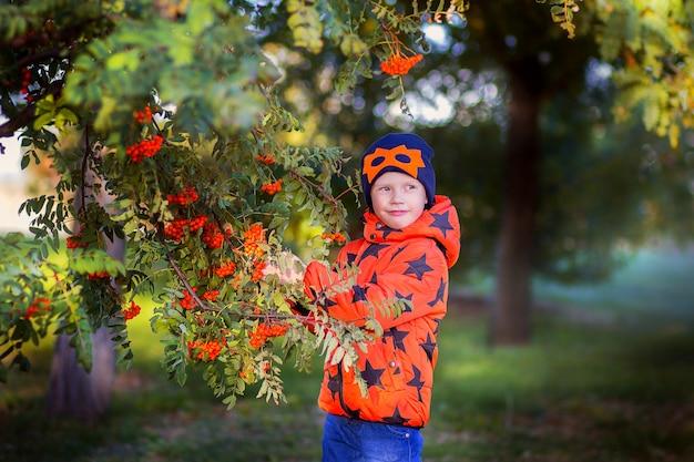 주황색 재킷을 입은 어린 소년이 큰 마가목 근처에서 포즈를 취하고 있습니다. 산 애쉬에서 가을 사진 세션입니다.