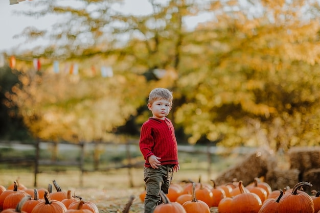 カボチャのフィールドに立っている赤い秋のセーターの小さな男の子