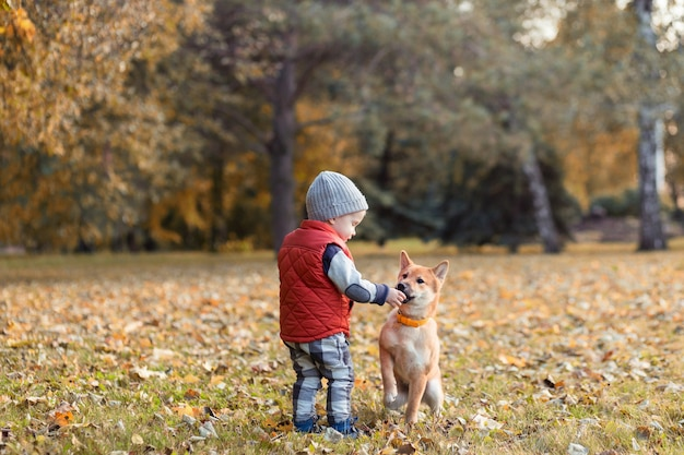 어린 소년이 가을 공원에서 산책하는 시바 이누 강아지에게 먹이를 주고 있습니다. 아기가 함께 노는 시바이누 개, 가장 친한 친구 개념