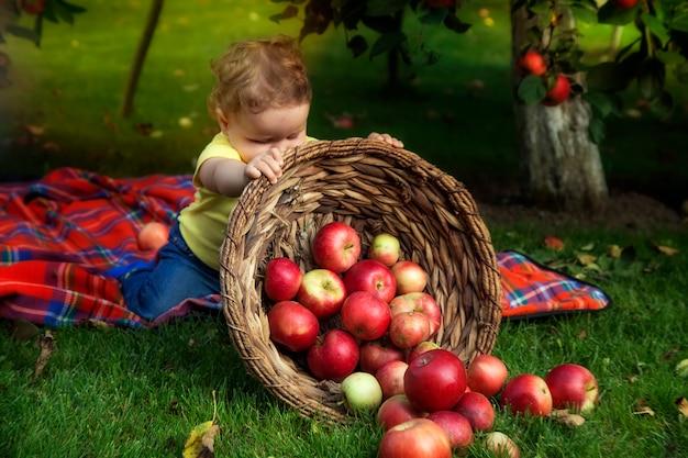 小さな男の子はバスケットにリンゴで遊んでいます。