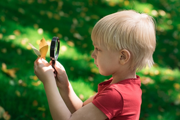 Little boy looking through a magnifying glass on the leaf. interest in science in children. curiosity the concept