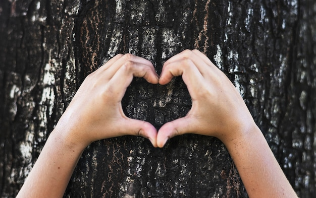Little boy making a heart shape on a tree