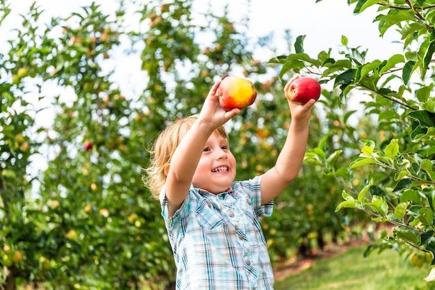 リンゴ園に滞在し、2つのリンゴを手に持った2歳の少年。