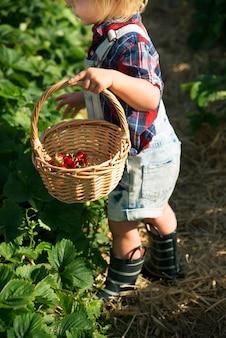 小さな男の子、農場でイチゴを選ぶ