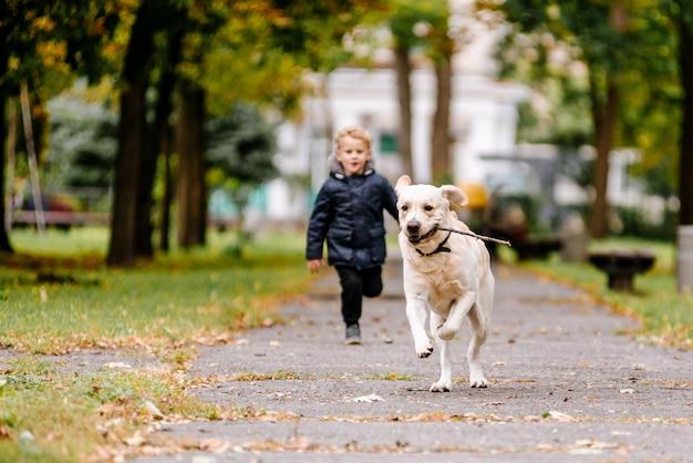 Маленький мальчик играет, бежит со своей собакой лабрадор в парке осенью