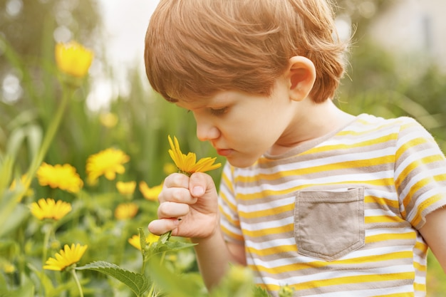 Little boy smelling daisy.
