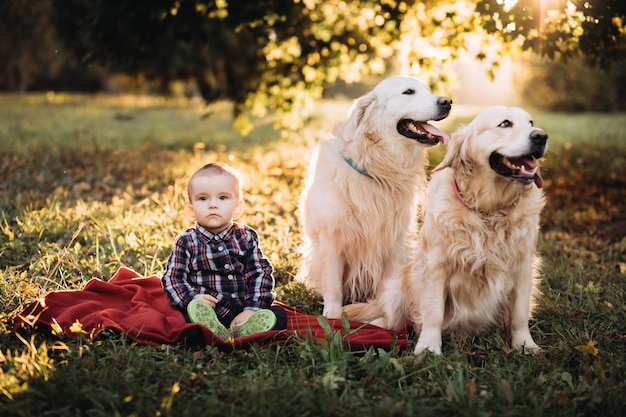 Little boy and two golden retrievers in a beautiful autumn park