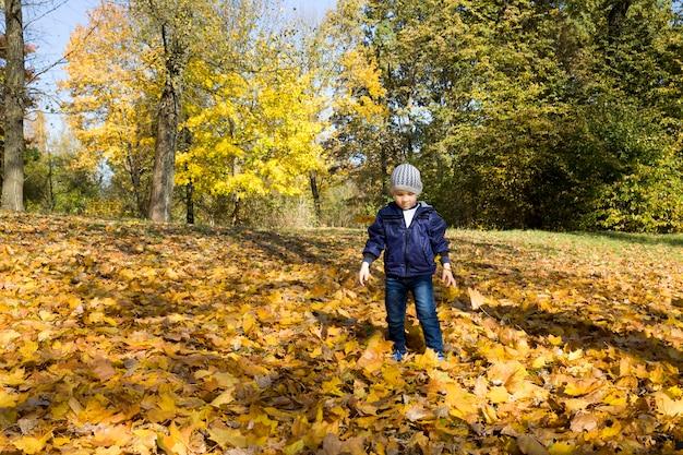 A little boy walks in the autumn park