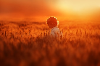 Little boy walks in the field full of golden wheat