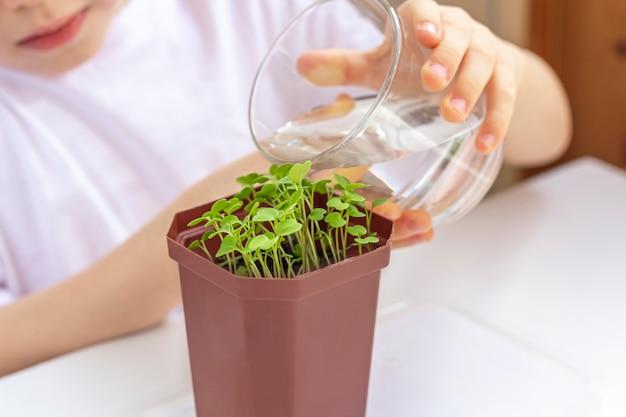 Маленький мальчик полива молодых растений в горшке. забота о природе. концепция праздника земли и всемирного дня окружающей среды. выращивание овощей в домашних условиях.