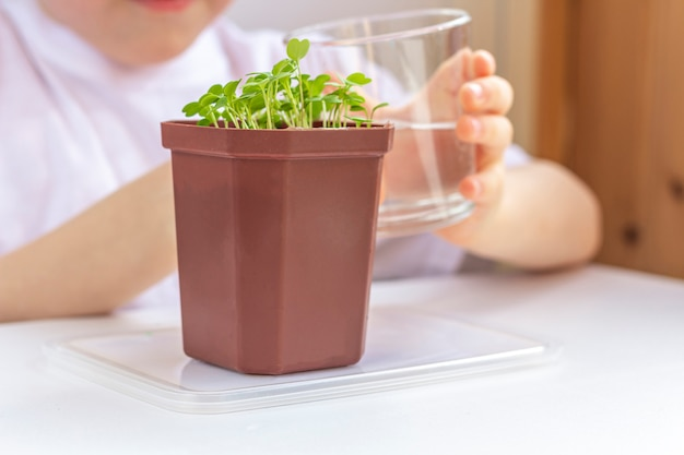 냄비에 어린 식물을 급수하는 어린 소년. 자연을 돌보는 것. 지구의 날 휴일과 세계 환경의 날의 개념. 집에서 야채를 재배.