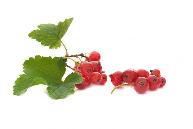 Маленькая ветвь красной смородины на белом фоне