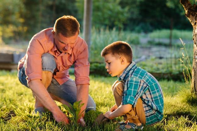 弟と妹は日没時に美しい春の庭に父親と一緒に苗を植えています。新生活。環境を守ろう。周辺の世界と自然への注意深い態度。