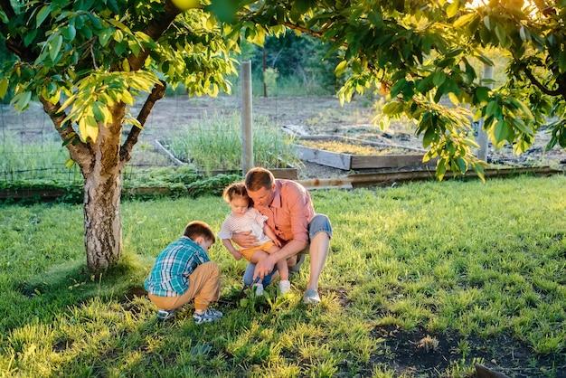 남동생과 여동생이 일몰의 아름다운 봄 정원에서 아버지와 함께 묘목을 심고 있습니다. 새로운 삶. 환경을 저장