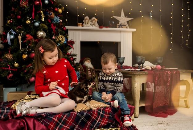 남동생과 여동생이 크리스마스 트리 근처 방에 앉아 치와와 강아지와 놀고 있다