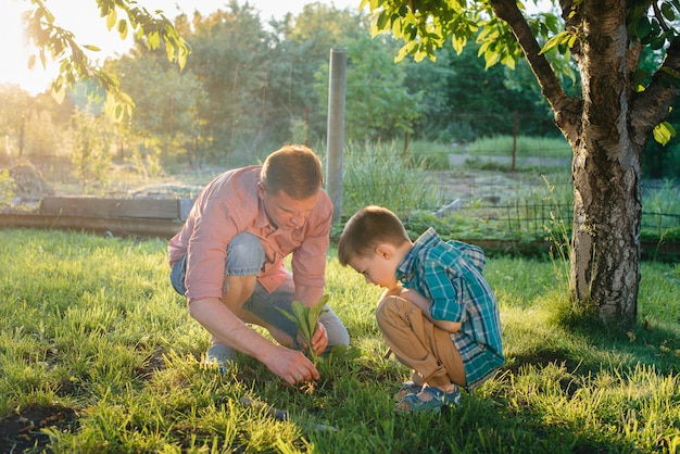 Little brother and sister are planting seedlings with their father in a beautiful spring garden at sunset. new life. save the environment. careful attitude to the surrounding world and nature.