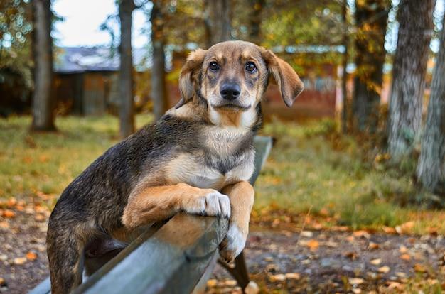 Маленькая коричневая бездомная собака на улице