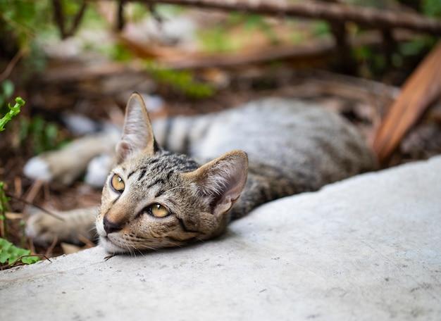 Little brown tabby cat kitten resting lay down on the floor