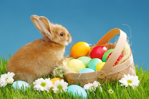Little bunny in basket with decorated eggs. easter holyday concept.