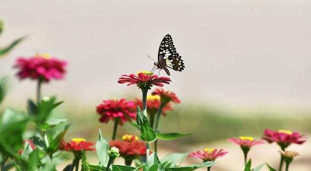 Little butterfly find food on red flower in morning