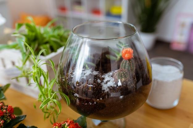小さなサボテン。植物の近くに立っている素敵なかわいい小さなサボテンと透明なガラスのクローズアップ