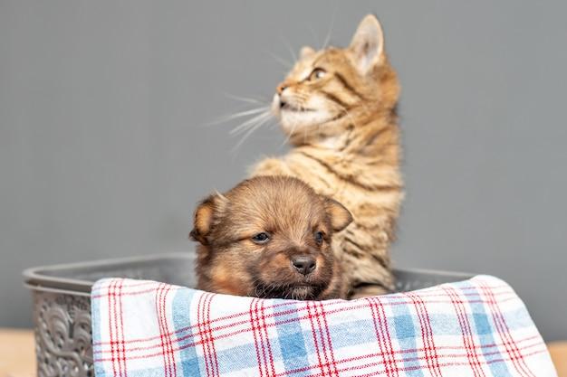 Маленькая кошка и щенок в пластиковой коробке, интересные животные. дружба кошек и собак