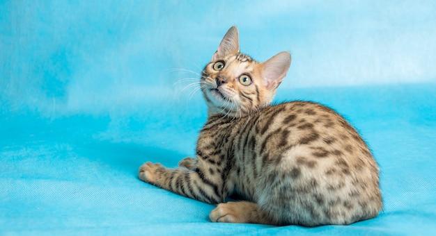 Piccolo gatto sull'azzurro
