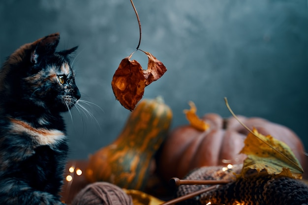Little cat looks with interest at an autumn leaf on a twig a cat yarn and knitting and two large rip...