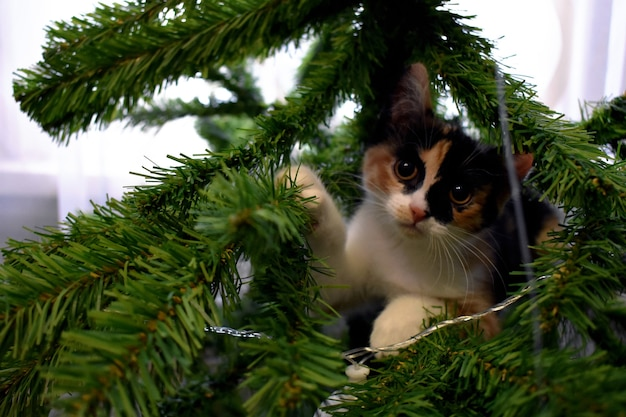 Little cat plays with christmas tree