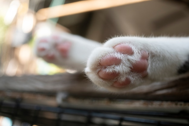 白いテーブルの上に小さな猫の足がかわいく見えます。