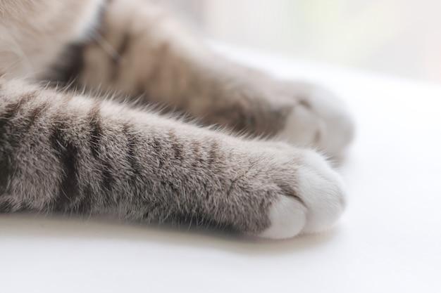 Ножки маленькой кошки выглядят симпатичными.