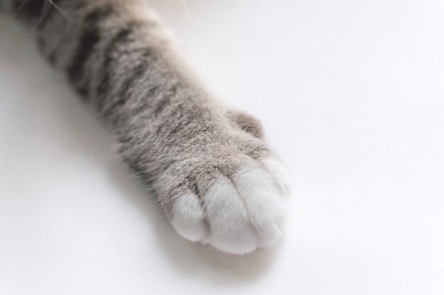 Ножки маленькой кошки выглядят симпатичными. Premium Фотографии