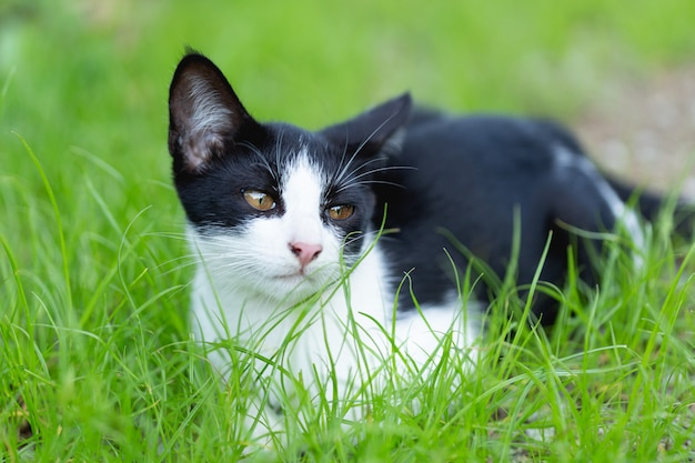 Little cat sitting on the grass.