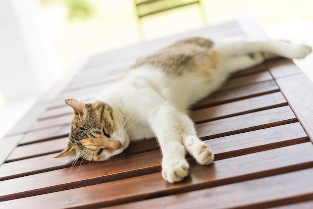 Маленькая кошка спит и лежит на деревянном столе на открытом воздухе