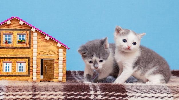 おもちゃの家の近くで小さな猫が遊ぶ