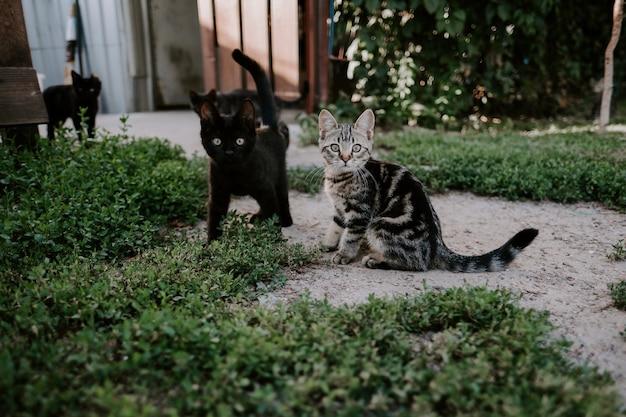 Маленькие кошки сидят на открытом воздухе в зеленой траве