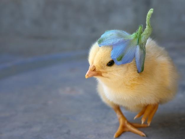 花と小さな鶏。
