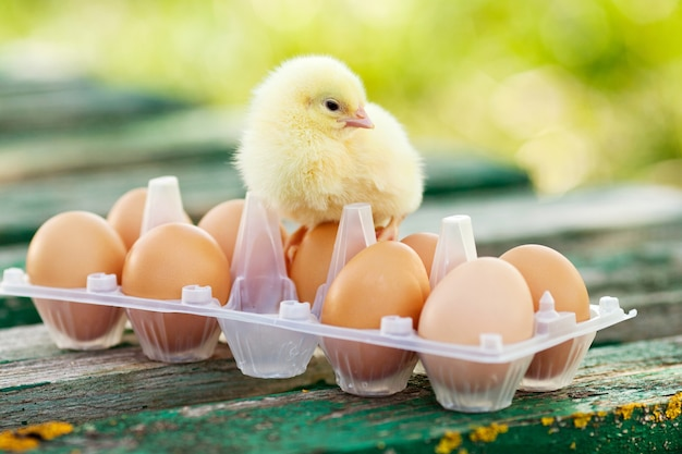 木製のテーブルの上の小さな鶏と卵。緑のbsckground。